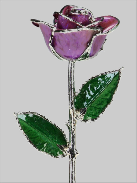 Purple Platinum trim Rose by 24K Rose