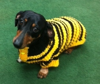 dutch_in_bumblebee_sweater_1__11-12-14.jpg