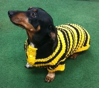 dutch_in_bumblebee_sweater_2__11-12-14.jpg